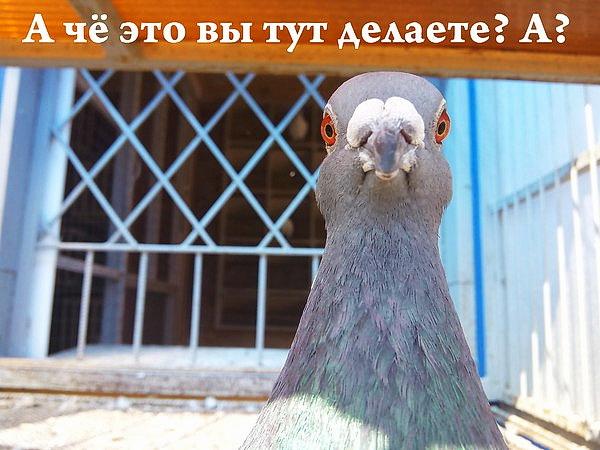http://s5.uploads.ru/t/lCuFI.jpg