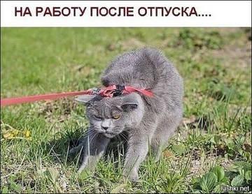 http://s5.uploads.ru/t/lGOBD.jpg