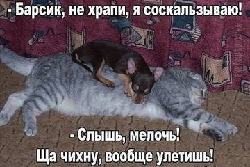 http://s5.uploads.ru/t/nPSfM.jpg
