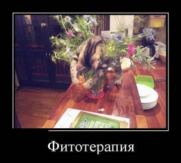 http://s5.uploads.ru/t/ng7Gx.jpg