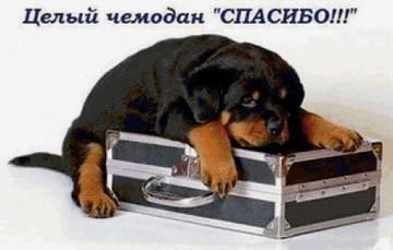 http://s5.uploads.ru/t/oPxA3.jpg