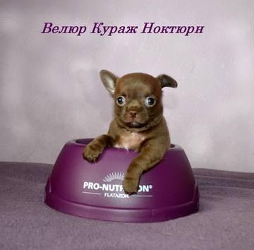 http://s5.uploads.ru/t/pRbCv.jpg