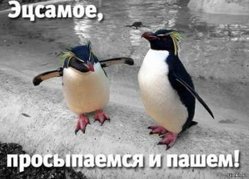 http://s5.uploads.ru/t/poCvV.jpg