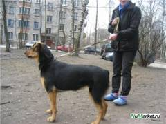 http://s5.uploads.ru/t/r2mf8.jpg