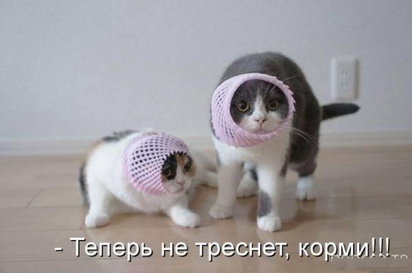 http://s5.uploads.ru/t/sPj0W.jpg