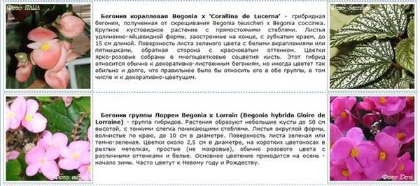 http://s5.uploads.ru/t/sl4aL.jpg