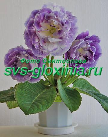 http://s5.uploads.ru/t/suVK3.jpg