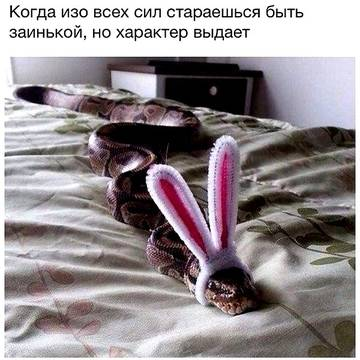 http://s5.uploads.ru/t/t0YWd.jpg