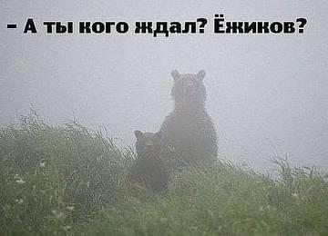 http://s5.uploads.ru/t/uOgrX.jpg
