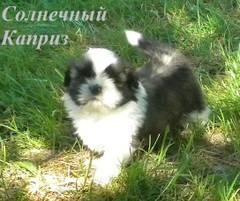 http://s5.uploads.ru/t/uvKTn.jpg