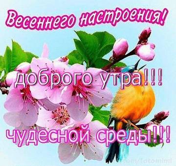 http://s5.uploads.ru/t/vEG1H.jpg
