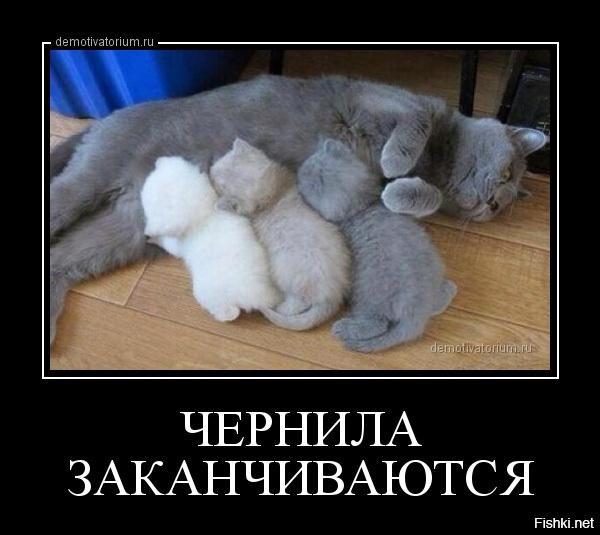 http://s5.uploads.ru/t/vVeND.jpg