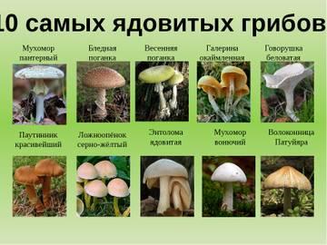 http://s5.uploads.ru/t/veBnt.jpg