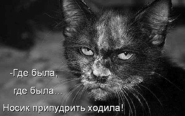 http://s5.uploads.ru/t/vlDrL.jpg