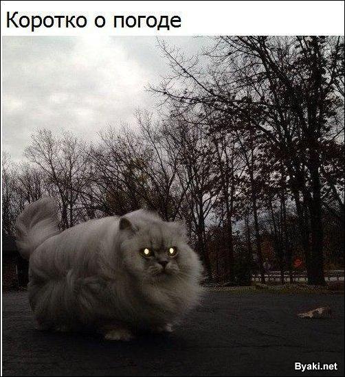 http://s5.uploads.ru/t/wVMfk.jpg