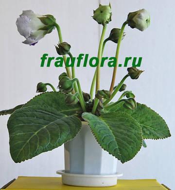 http://s5.uploads.ru/t/wkvzi.jpg