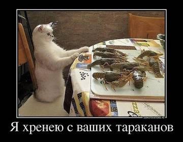 http://s5.uploads.ru/t/wo3fH.jpg
