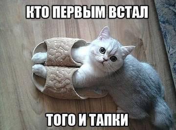 http://s5.uploads.ru/t/x2Tcp.jpg