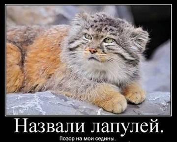 http://s5.uploads.ru/t/xbdRO.jpg