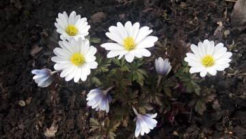 Весна идет!!! - Страница 21 Xkvpj