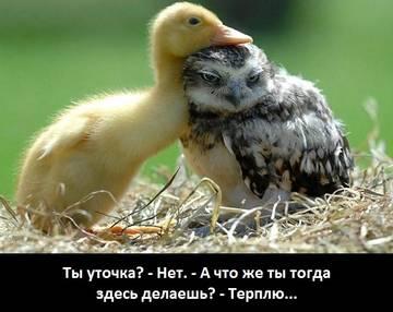 http://s5.uploads.ru/t/y1PJl.jpg