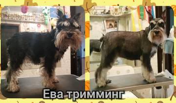 http://s5.uploads.ru/t/yHxJU.jpg