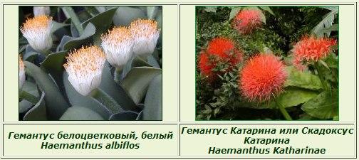 http://s5.uploads.ru/t/zDAo9.jpg
