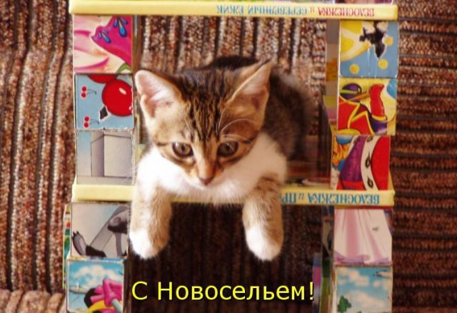 http://s5.uploads.ru/tq7rg.jpg