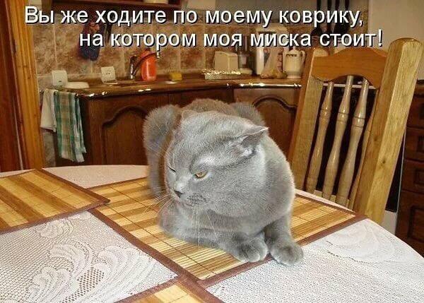 http://s5.uploads.ru/u9s3C.jpg