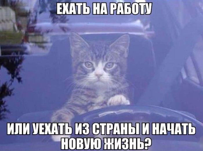 http://s5.uploads.ru/wIs1V.jpg
