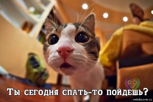 http://s5.uploads.ru/ycnvJ.jpg