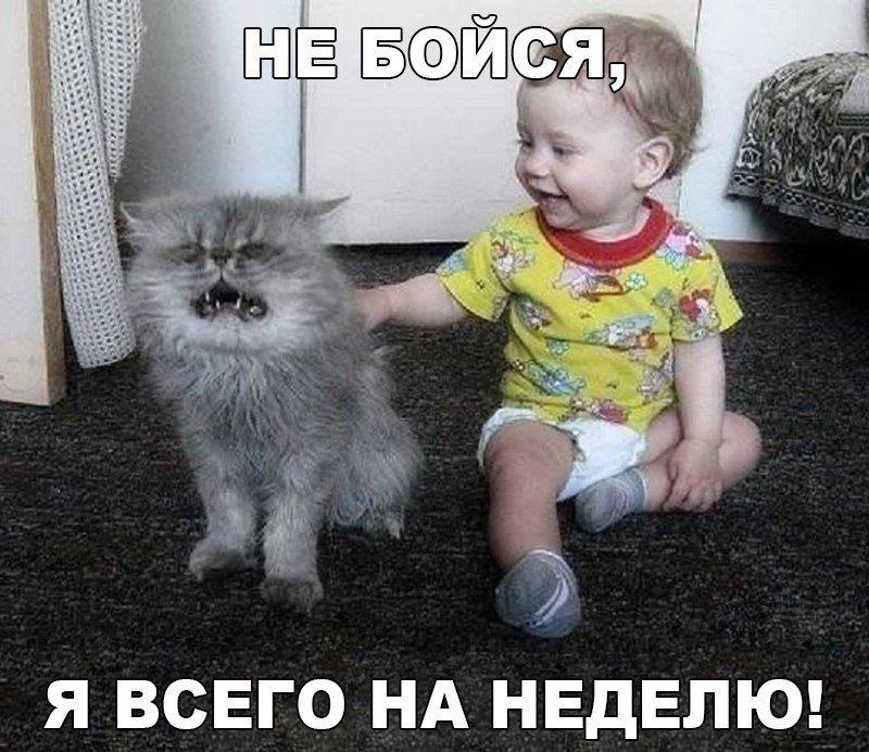 http://s5.uploads.ru/zKNmF.jpg