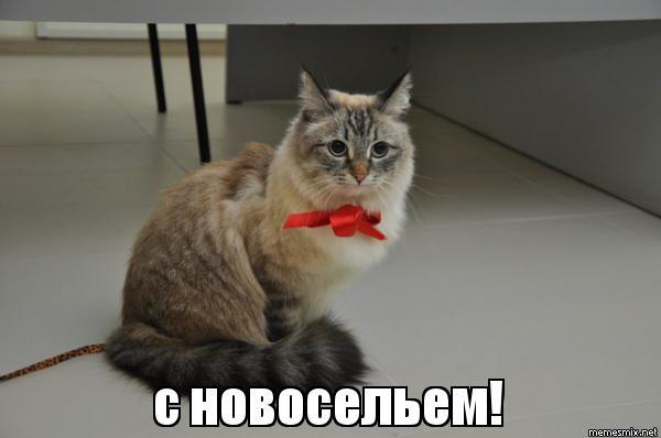 http://s5.uploads.ru/Cmh7T.jpg