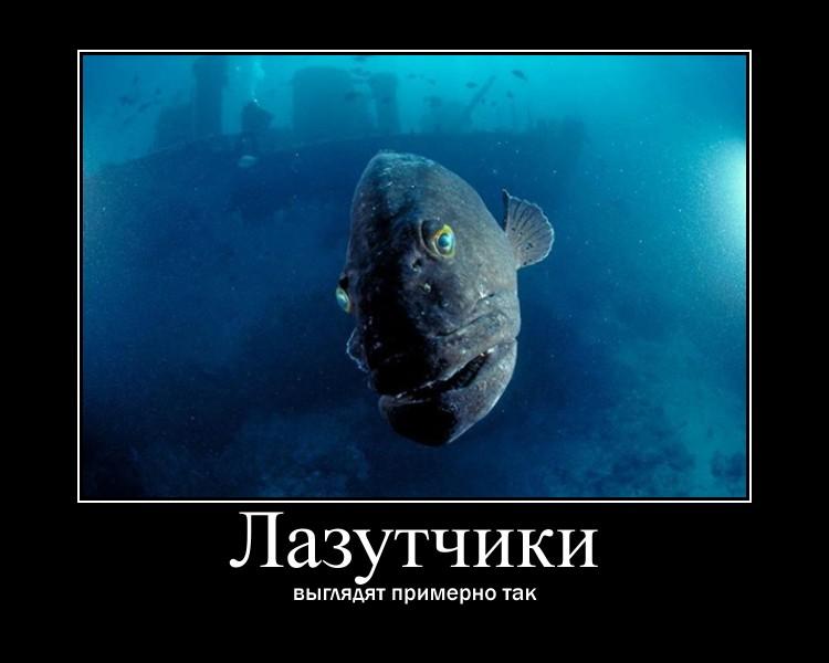 http://s5.uploads.ru/Tay9c.jpg
