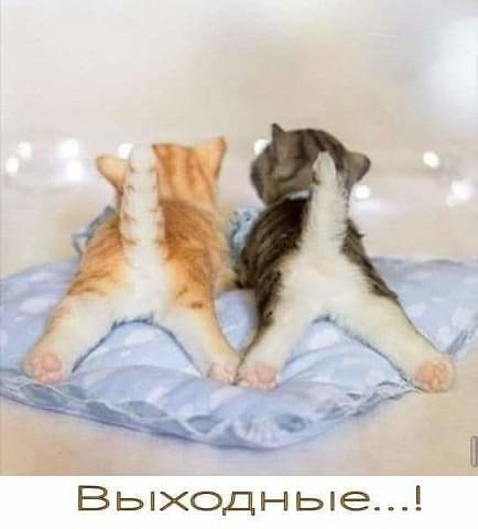 http://s5.uploads.ru/YAwZ5.jpg