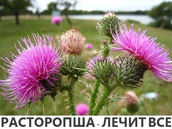 http://s5.uploads.ru/t/4VviR.jpg