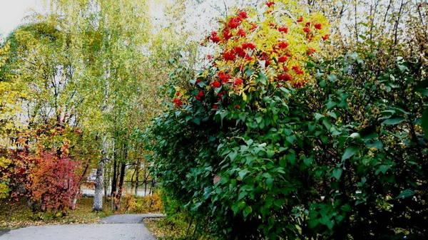 http://s5.uploads.ru/t/9t50w.jpg