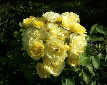 http://s5.uploads.ru/t/NfPYn.jpg