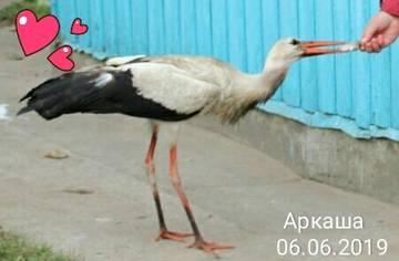 http://s5.uploads.ru/t/V9QDS.jpg