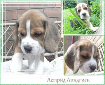 http://s5.uploads.ru/t/XlM3D.jpg