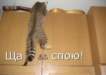 http://s5.uploads.ru/t/ZL1dy.jpg
