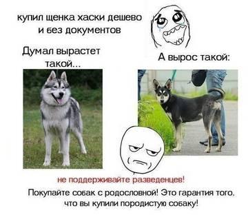 http://s5.uploads.ru/t/i6GRc.jpg