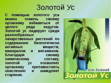 http://s5.uploads.ru/t/j7qmi.jpg