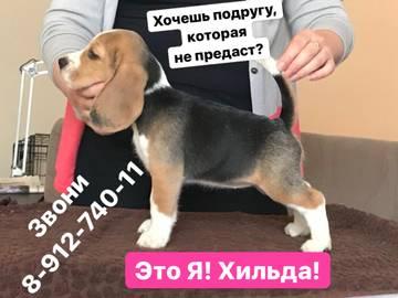 http://s5.uploads.ru/t/pPUN0.jpg