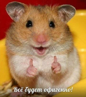 http://s5.uploads.ru/t/uxMgH.jpg